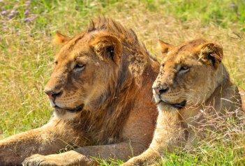 Safari v Tanzanii a Zanzibar